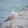 Mikroplastik Ditemukan Pada Semua Burung Pemangsa yang Diteliti Ini