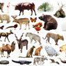 Mengapa Sangat Sulit Menghitung Jumlah Spesies yang Ada di Bumi?