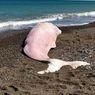 Lagi, Paus Muda Ditemukan Mati dengan Sampah Plastik di Perutnya