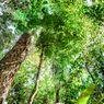 Kabar Buruk, Hutan Amazon Menghasilkan Karbon Lebih Banyak Dibanding yang Diserapnya