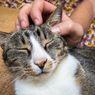 Bagaimana Peneliti Bisa Mendeteksi Virus Corona Pada Kucing?
