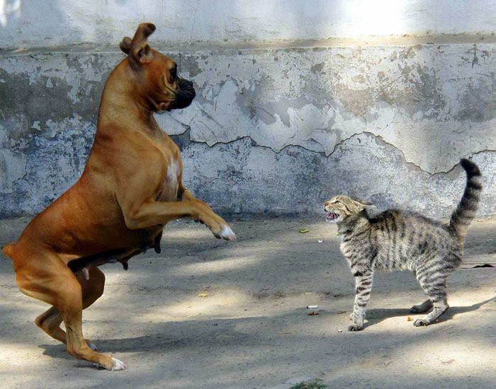 Benarkah Kucing Dan Anjing Sering Berkelahi Seperti Kata Peribahasa Semua Halaman Bobo
