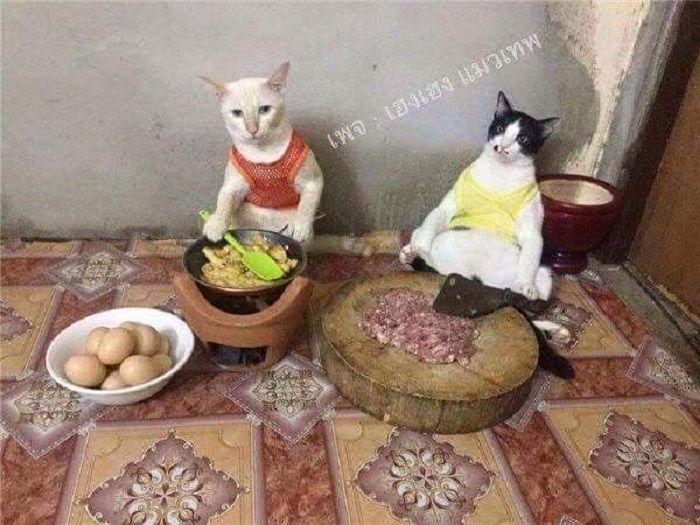 Download 95+  Gambar Kucing Nikah Paling Lucu Gratis