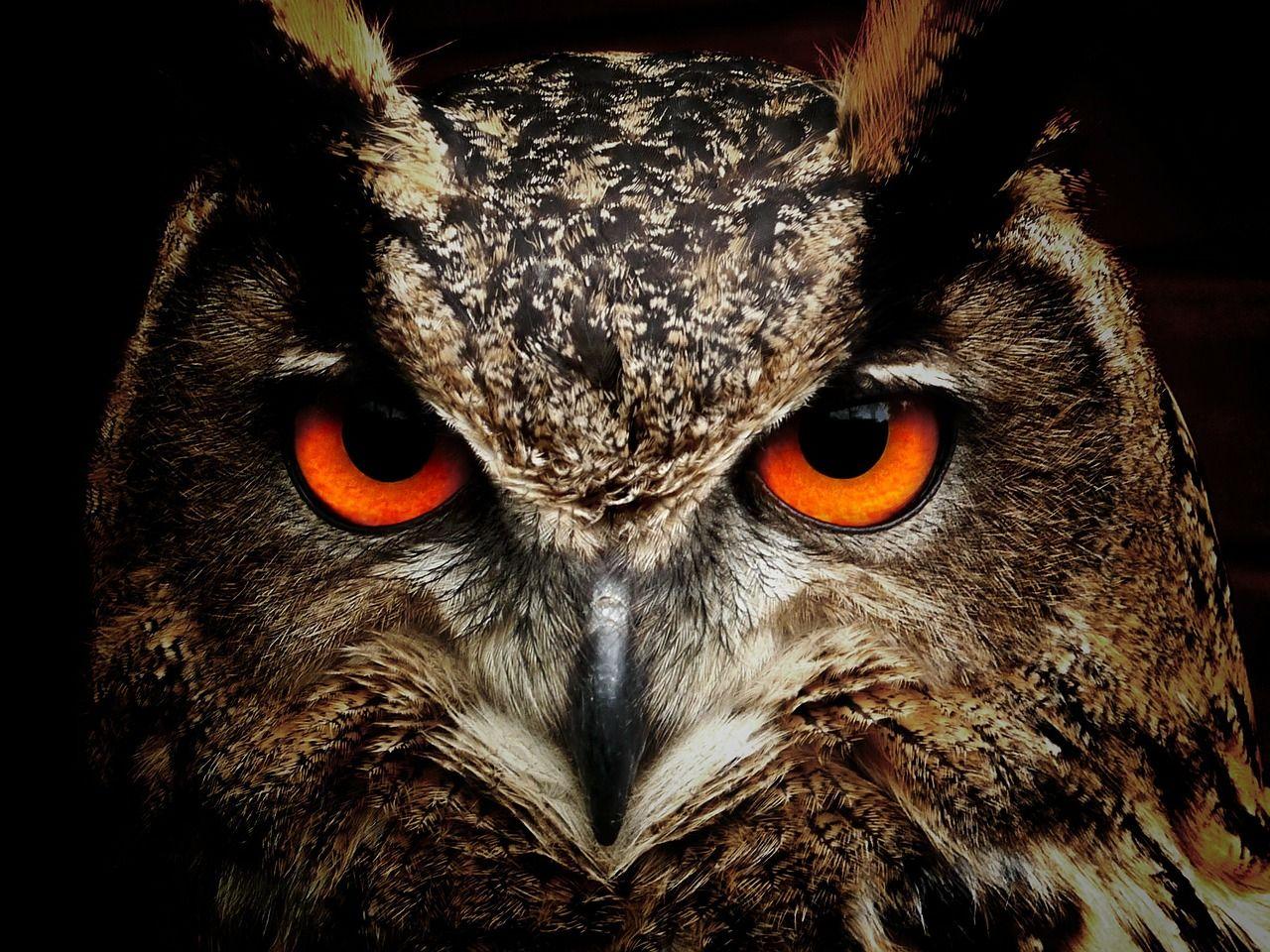 5 Jenis Burung Hantu Yang Ada Di Film Harry Potter Masih Ingat