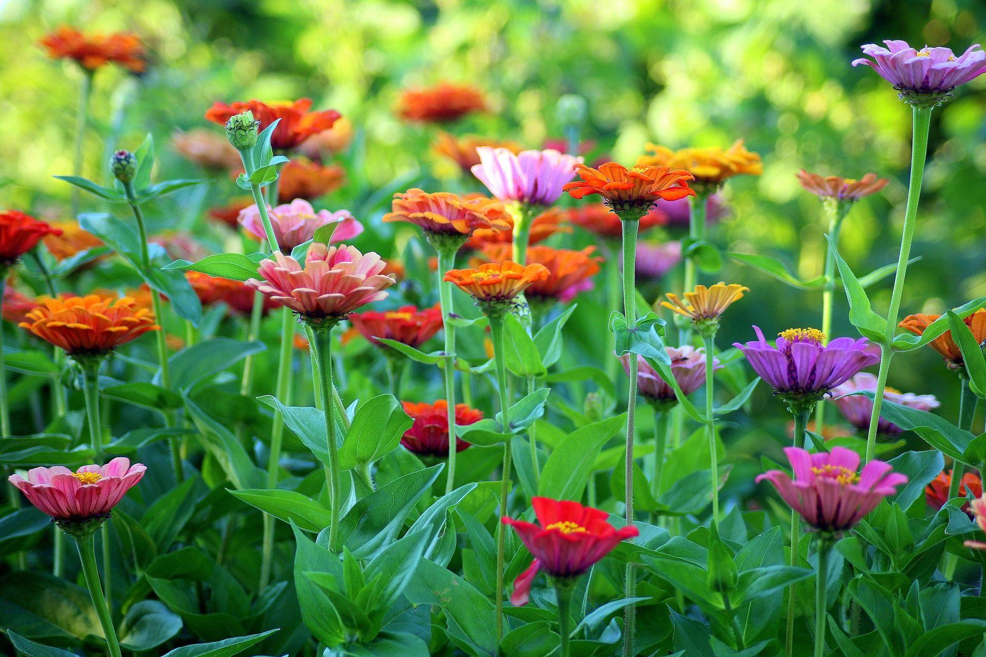 Bunga Punya Warna Warni Yang Indah Ini 3 Penyebab Perbedaan Warnanya Semua Halaman Bobo