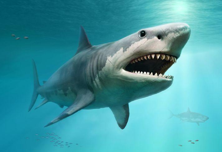 Fakta-fakta Megalodon, Hiu Purba Raksasa yang Hidup Jutaan Tahun ...