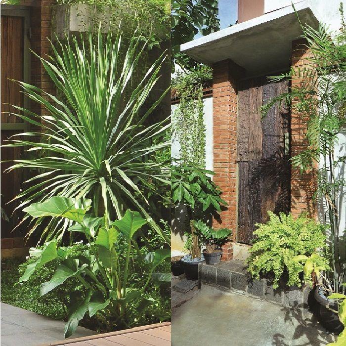 Inpirasi Desain Taman Bali Rumah Di Tengah Kota Simpel Dan Eksotis