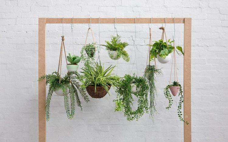 Desain Taman Bunga Gantung  catat 5 tips merawat tanaman gantung agar selalu segar dan