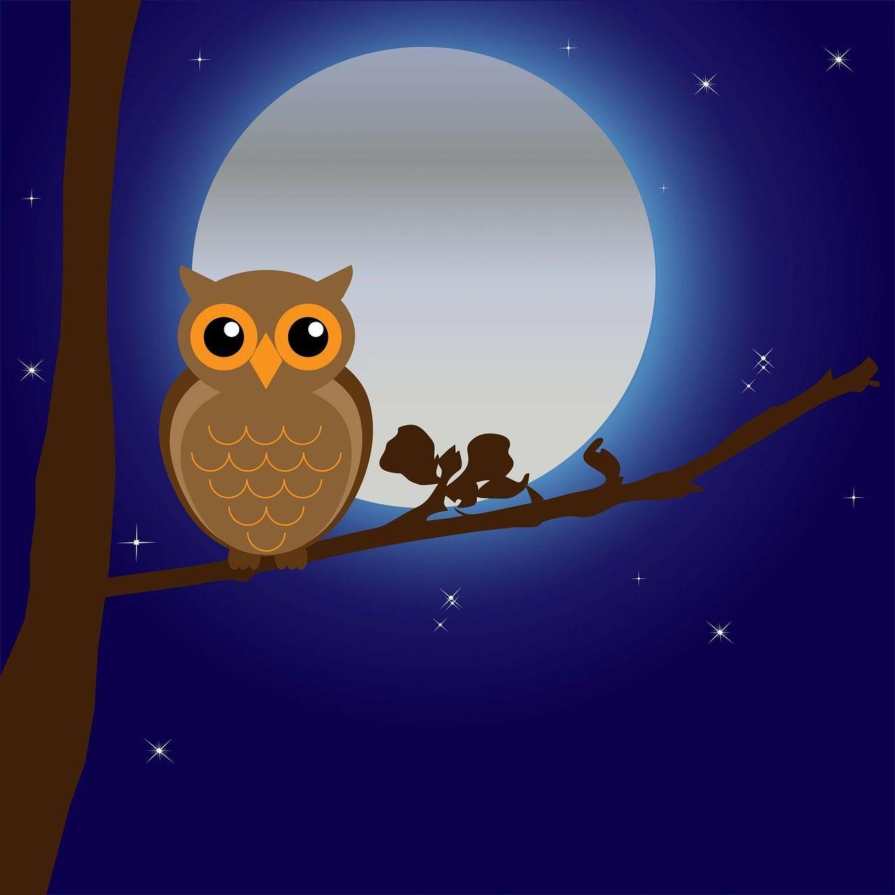 Coba Buat Animasi Sederhana Burung Hantu Belajar Bersama