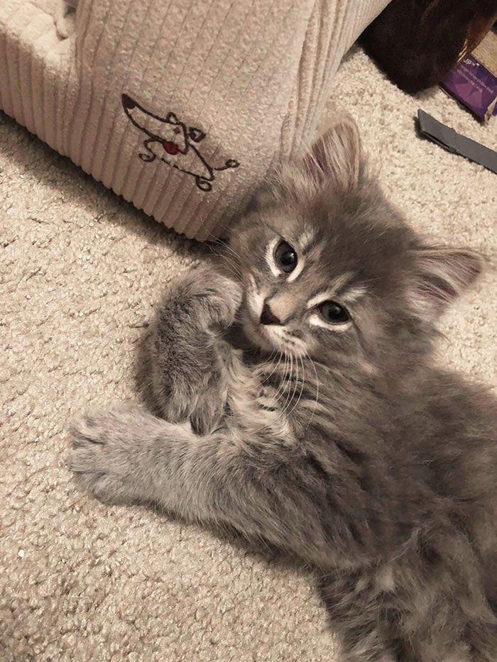 Gambar Kucing Terimut Di Dunia 81021 Nama Untuk Kucing Comel Lucu Dan Unik