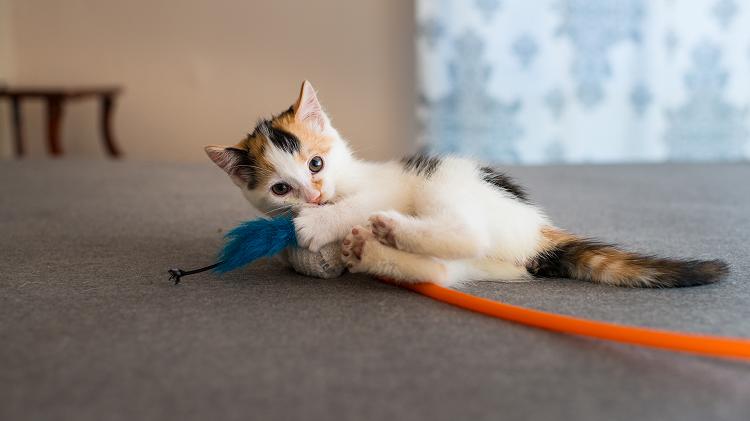 Inilah Jawaban Kucing Jantan Belang Tiga Selalu Dimakan Induknya Semua Halaman Intisari