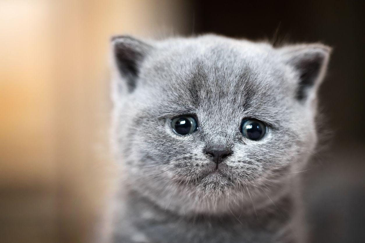 Wah Ternyata Ini 7 Hal Yang Membuat Kucing Pergi Dari Rumah Semua Halaman Bobo