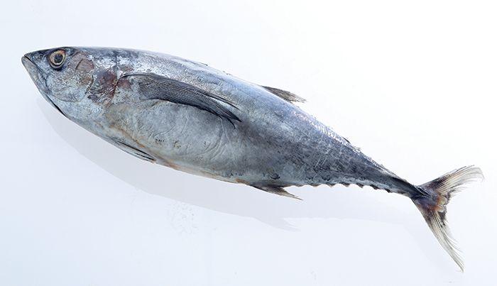 Kenali Aneka Ragam Ikan Laut Yang Ada Di Pasar Supaya Tidak Tertukar Semua Halaman Sajian Sedap