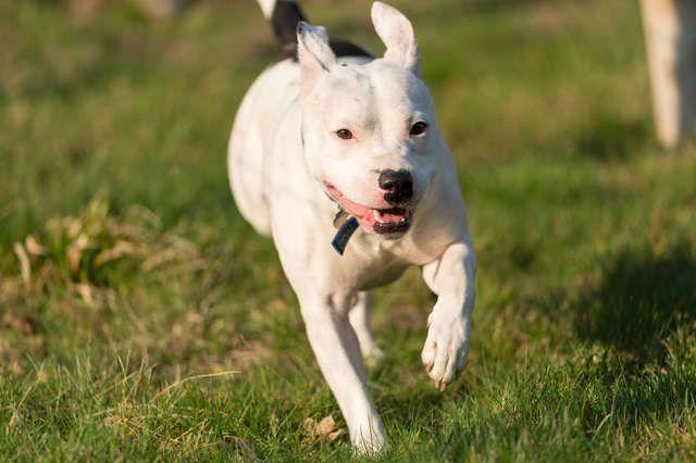 Sebelumnya Dibuang Oleh Pemiliknya Kini Anjing Ini Sangat Bahagia Setelah Diadopsi Semua Halaman Wiken