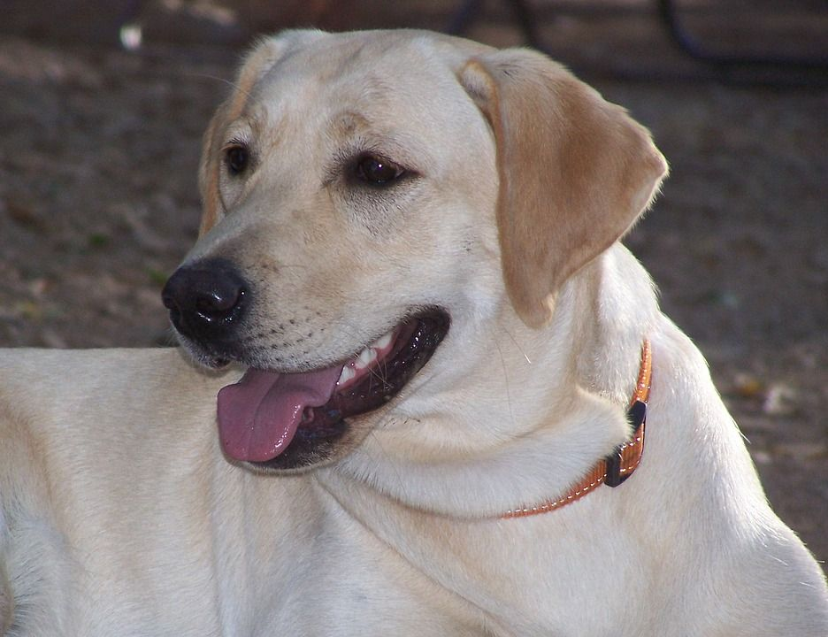 Pintar Dan Hebat Ini 5 Jenis Anjing Yang Sering Digunakan Polisi Semua Halaman Bobo