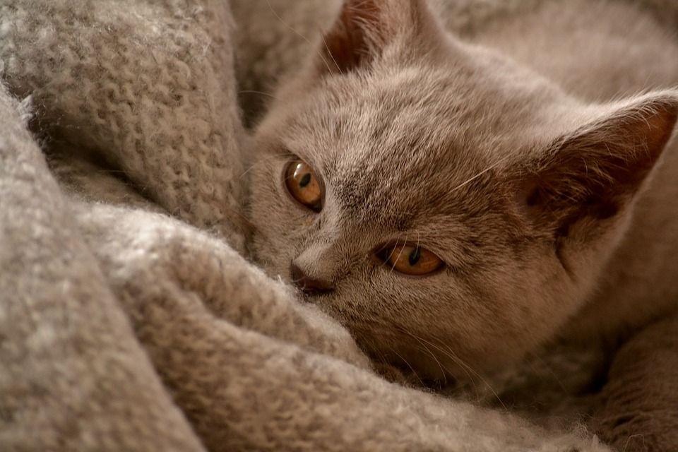 Jangan Potong Kumis Kucing Ini 3 Dampak Buruknya Buat Si Hewan Kesayangan Semua Halaman Grid Id
