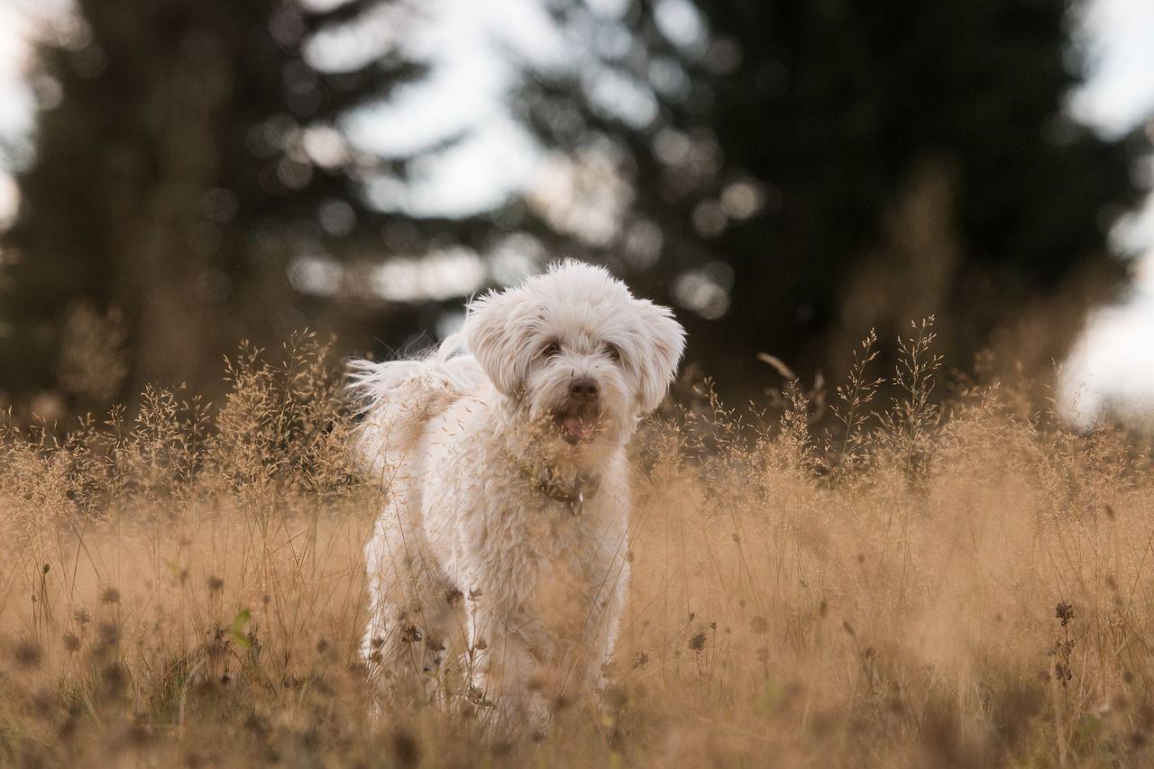 Apakah Benar Anjing Buta Warna Cari Tahu Yuk