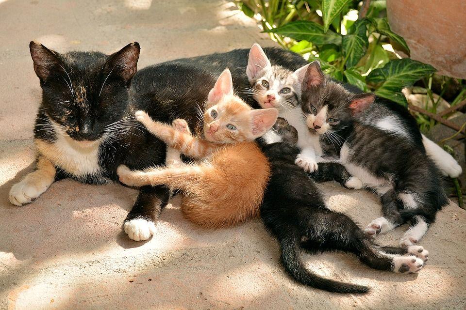 Bolehkah Anak Kucing Makan Makanan Kucing Dewasa Semua Halaman