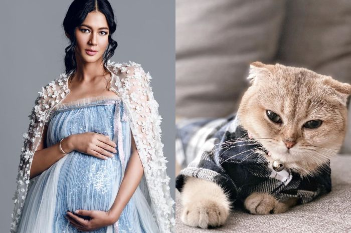 Diingatkan Netizen Soal Bahaya Bulu Kucing Untuk Ibu Hamil Paula Verhoeven Beri Jawaban Kocak Ini Kucing Mahal Udah Divaksin Semua Halaman Grid Id
