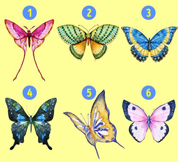 pilih salah satu ilustrasi kupu-kupu ini