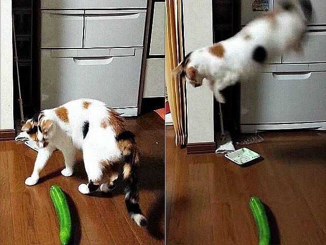 Ternyata 8 Hal Ini Membuat Kucing Takut Bahkan Sampai Membuat