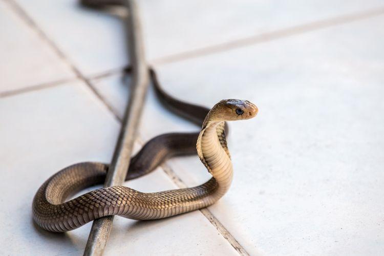 ♟ Teranyar Arti mimpi dikejar ular bagi wanita yang sudah menikah