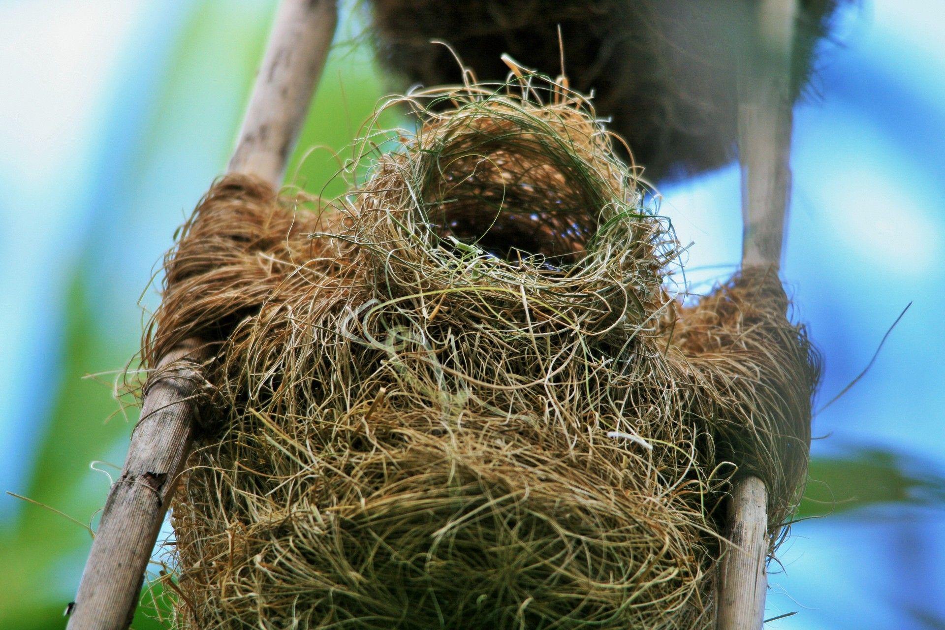 Burung Manyar Sering Membangun Sarang Unik Ada Sarang Yang Beratnya Capai 1 Ton Semua Halaman Bobo