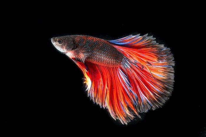 Tafsir Mimpi Ikan Pernah Bermimpi Melihat Ikan Hias Ini Maknanya Semua Halaman Sonora Id