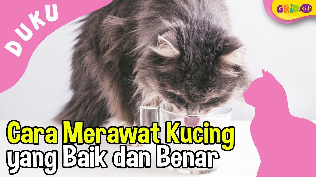 Berita Cara Merawat Kucing Terbaru Hari Ini Kids