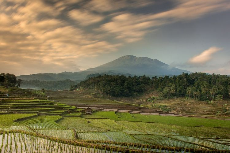 Ilustrasi gunung - Pemandangan Gunung Ciremai dan persawahan.(SHUTTERSTOCK / BABAN SOBARUDIN)