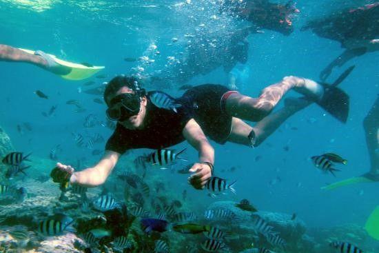 Wisata Bahari Snorkeling dan Diving