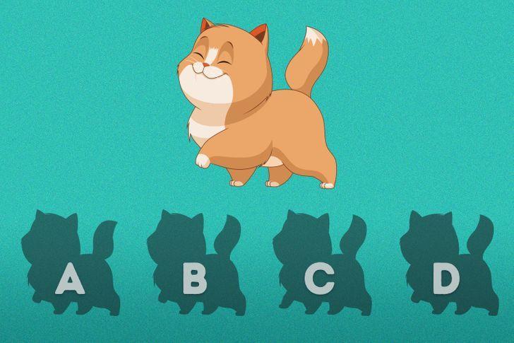 Bayangan mana yang cocok untuk kucing tersebut?