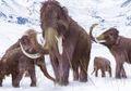 Menghidupkan Kembali Mammoth, Ilmuan: Hal Tersebut Mungkin Terjadi