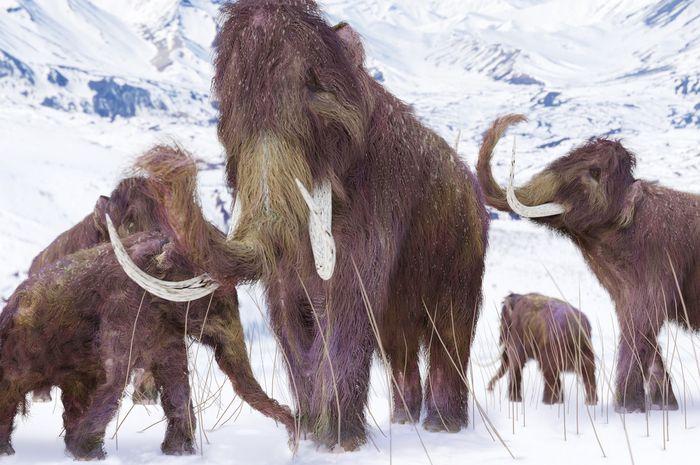 Ilustrasi Mammoth