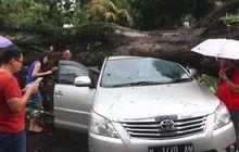 Kijang Innova Jadi 'Alas' Pohon Tumbang, Rebah Tepat di Atap