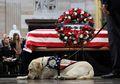 Kisah Sully, Anjing Pelayan George HW Bush yang Setia Menemani Hingga di Samping Peti Mati