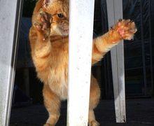 Lucu! 15 Foto ini Nunjukin Kalau Kucing Ternyata Juga Jago Menari