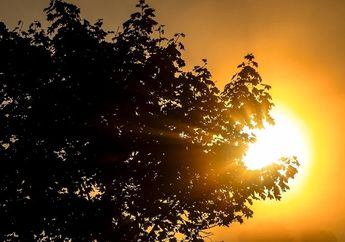 Inilah Alasan Mengapa Matahari Memiliki Peranan Penting Bagi Makhluk Hidup di Bumi