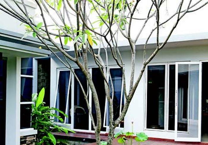 5 Tanaman Yang Cocok Untuk Rumah Modern Ini Ciri Dan Jenisnya Semua Halaman Idea