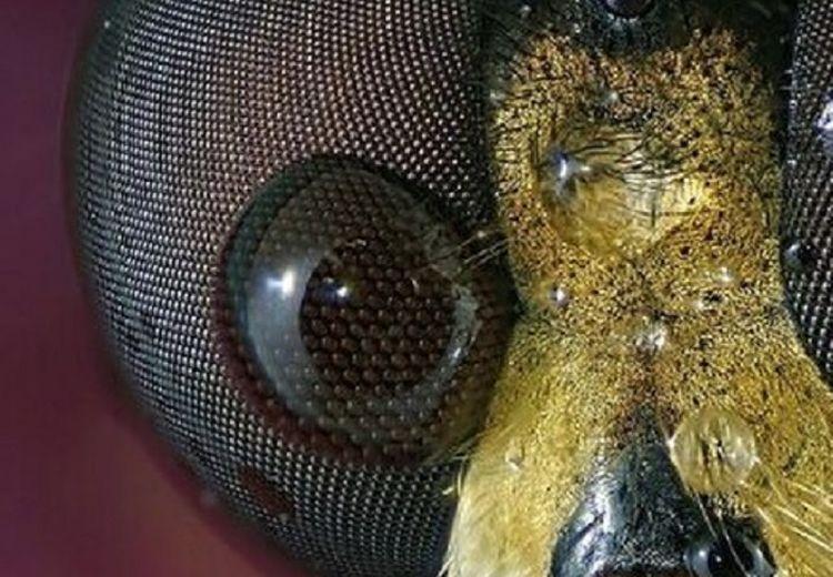 9 Foto Detail Benda-Benda di Sekitar Kita Jika Dilihat dari Mikroskop