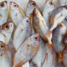 Waspada! Tak Semua Ikan Menyehatkan, Berpotensi Tercemar Plastik