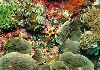 Nusa Penida, Perpaduan Budaya dan Panorama Bawah Air
