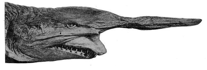 Bentuk kepala dan mulut hiu goblin