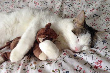 Jangan Biarkan Kucing Tidur Di Kasurmu Kalau Ingin Terhindar Dari