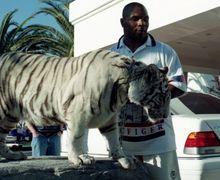 Berani Usik Harimau Mike Tyson, Seorang Wanita Malah Dapat Rp4 Miliar Meski Luka Parah