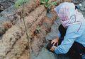 Tanggul Laut Ramah Lingkungan dari Sabut Kelapa Ala Peneliti ITB