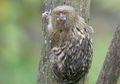 Monyet Paling Kecil di Dunia, Beratnya Hanya 5 Ons Saja, lo!