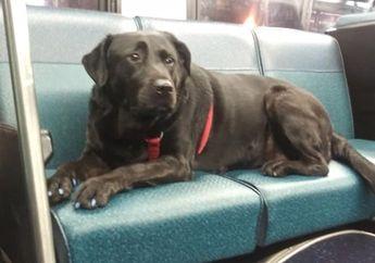 Suka Naik Bus Sendiri untuk Pergi ke Taman,  Eclipse Jadi Anjing Paling Mandiri di Dunia, Sampai Punya Fans Club!