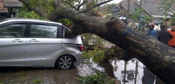 Ilustrasi mobil tertimpa pohon