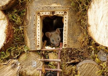 Nemu Sekeluarga Tikus, Fotografer Ini Buatin Mereka Miniatur Desa